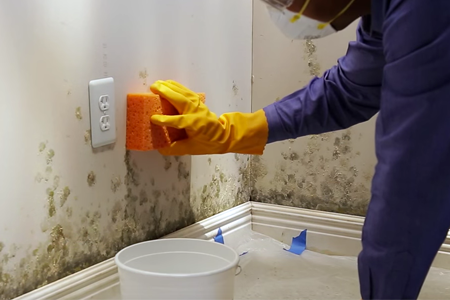 how to get rid of mould on walls permanently